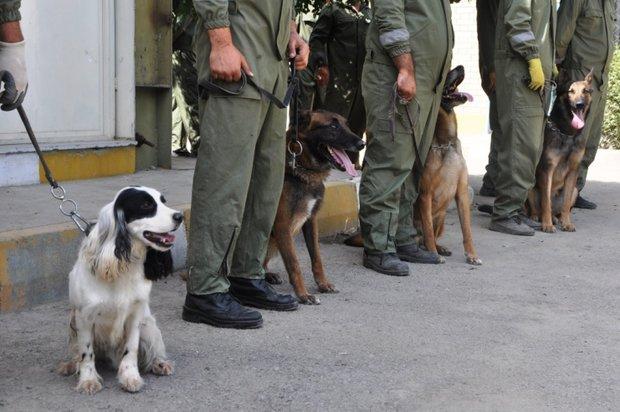 ایران مرکز آموزش منطقهای سگهای موادیاب میشود