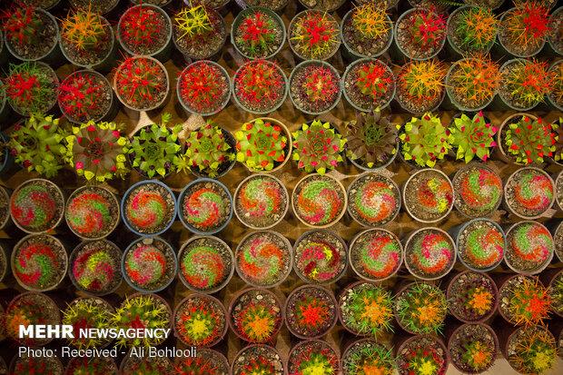 صادرات ۵ میلیون دلاری گل و گیاه/۲۳ کشور خریدار گلهای ایرانی هستند