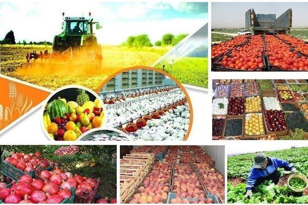 صادرات کشاورزی در شرایط کرونا هم رکورد زد